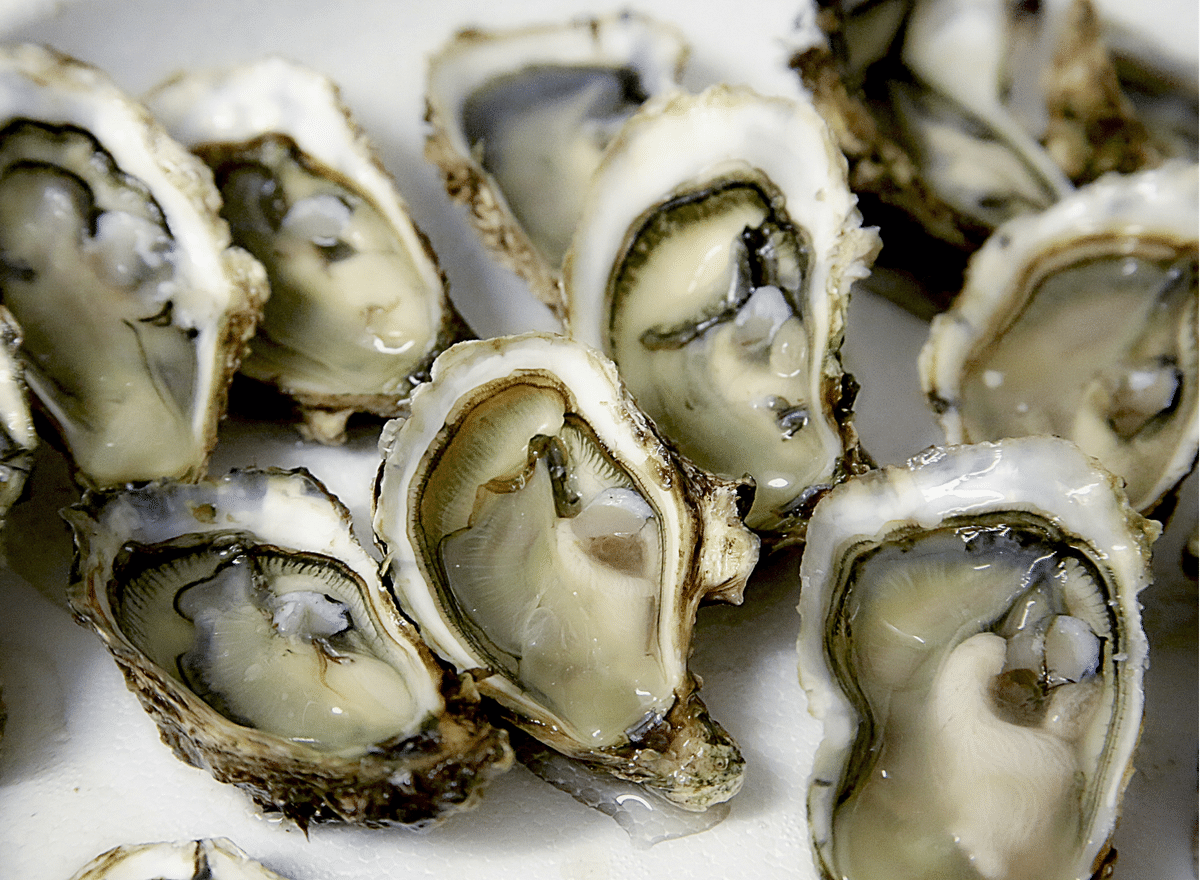 Zinc Benefits - Oysters a great source for zinc.
